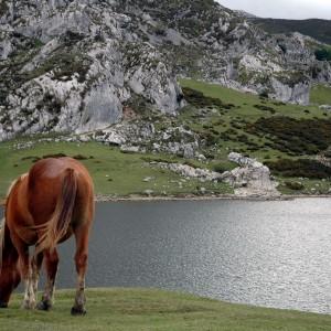 Lagos de Covadonga (Picos de Europa) 44 km.